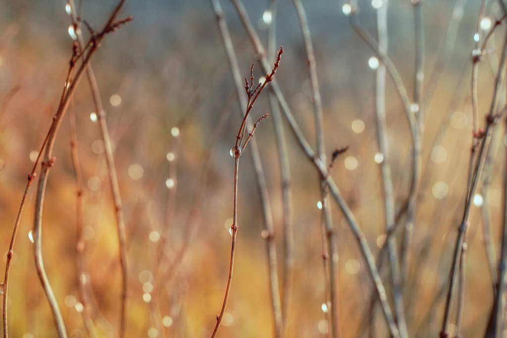 drops-on-branches.jpg